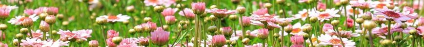 cropped-flower-meadow-1510602__3401.jpg